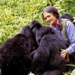 GORILAS. Dian Fossey, unos métodos salvajes para un fin legítimo